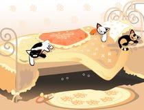 кот кровати вниз Стоковые Фото