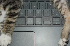 Кот клавиатуры Стоковая Фотография