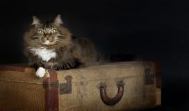Кот кладя винтажный чемодан Стоковые Изображения RF