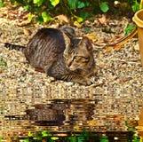 Кот кладя вниз стоковые изображения