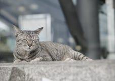 Кот кладя на лестницы стоковая фотография