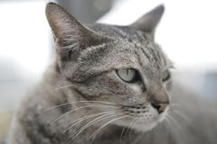 Кот кладя на лестницы стоковое фото rf