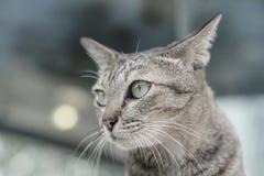 Кот кладя на лестницы стоковое изображение