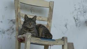 Кот кладя на стул акции видеоматериалы
