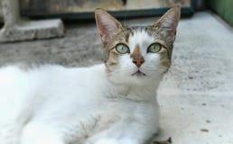 Кот ключей Стоковое Изображение RF