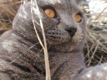 Кот лежа в соломе стоковые изображения rf