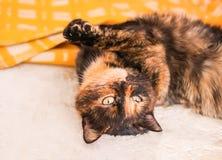 Кот лежа на старой сельской плите стоковые изображения rf