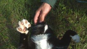 Кот лежит в траве сток-видео