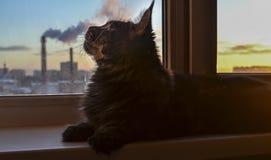 Кот лежит на windowsill и вдохи дымят, дым от камина фабрики Концепция загрязнения воздуха, чистого воздуха стоковое фото rf