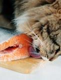 Кот лижа часть рыб стоковые изображения