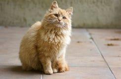 кот любознательний Стоковые Изображения RF