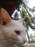 Кот макроса стоковые фото