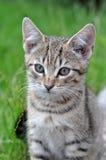 кот малый Стоковая Фотография