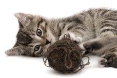кот малый Стоковая Фотография RF