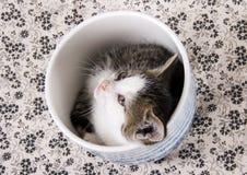 кот малый Стоковое Изображение
