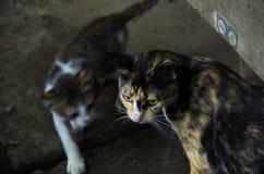 Кот матери и котята, кот ситца стоковые фотографии rf