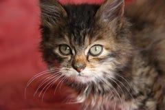 кот малый Стоковые Фото