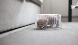 кот малый Стоковые Изображения RF