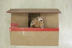 кот малый Стоковое Изображение RF