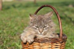 кот меховой Стоковое фото RF