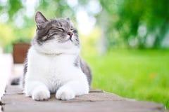 кот милый наслаждающся Стоковое Изображение
