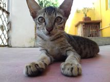 кот милый немногая Стоковые Изображения
