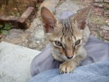 кот милый Стоковые Изображения RF