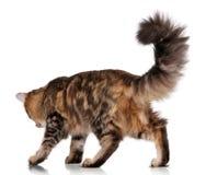 кот милый Стоковые Изображения
