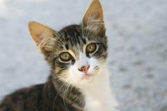 кот милый Стоковая Фотография
