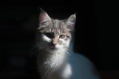 кот милый немногая Стоковые Изображения RF