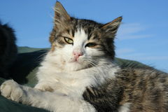 кот милый немногая Стоковое фото RF