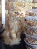 кот милый Стоковое фото RF