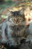кот милый Стоковое Изображение RF