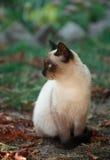 кот милый Стоковая Фотография RF