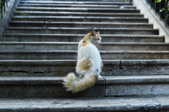 кот милый Стоковое Фото
