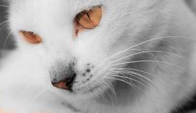 кот милый Стоковые Фото