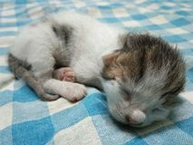 Кот младенца спать милый стоковые изображения rf