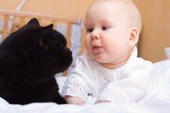 кот младенца черный Стоковое Фото