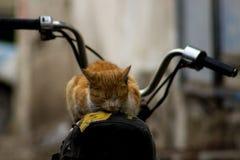Кот мотоцикла любящий Это фото было принято в индюка Стоковые Изображения RF