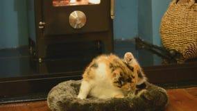 Кот моя перед огнем акции видеоматериалы