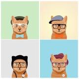 Кот моды Стоковые Фотографии RF