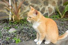 Кот наблюдающ садом aquaponics в тропиках стоковые фото
