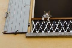 Кот наблюдая вас! Стоковые Фотографии RF