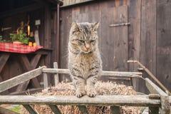кот наблюдая вас Стоковая Фотография RF