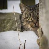 кот наблюдая вас Стоковые Фото