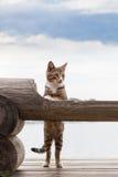 Кот наблюдая за стендом Стоковое Фото