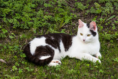 Кот наблюдая на что-то Стоковое Фото