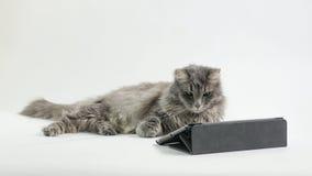 Кот наблюдая на экране Стоковая Фотография