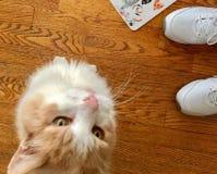 Кот надеясь для обслуживания стоковое фото