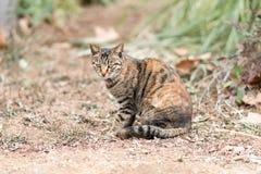 кот напольный Стоковое Изображение RF